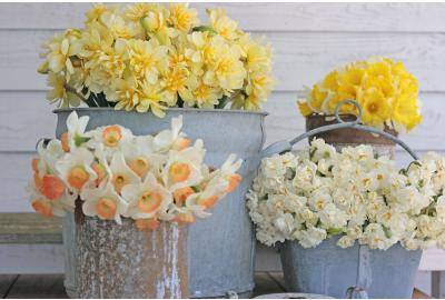 Kann ich Narzissen mit anderen Blumen in einer Vase mischen?