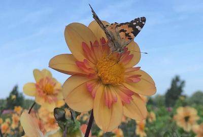 Schmetterlings- und Bienengarten