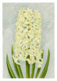 Hyacint L'Innocence