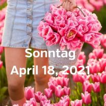 Besuch Tulpenfelder 18. April 2021