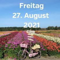 Besuch Dahlienfelder 27. August 2021