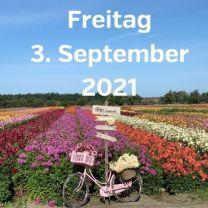 Besuch Dahlienfelder 3. September 2021