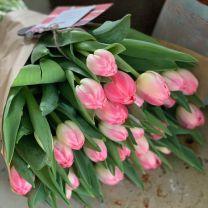 Tulip Feline
