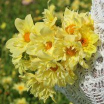 Dahlia Yellow Bird