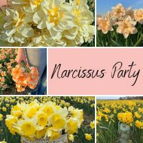 Narcissus Party