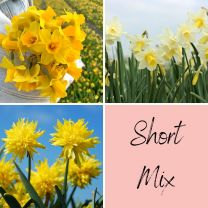 Short Mix