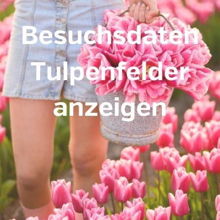 besuch tulpenfelder